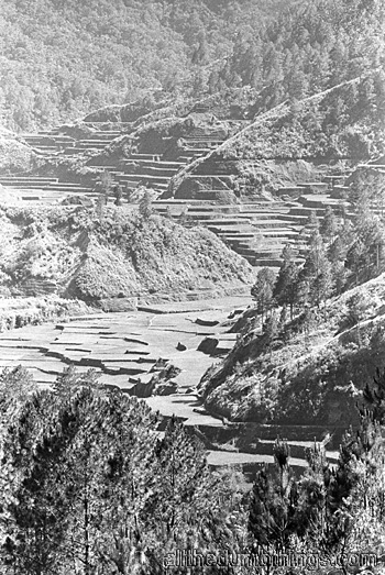 Barlig rice terraces