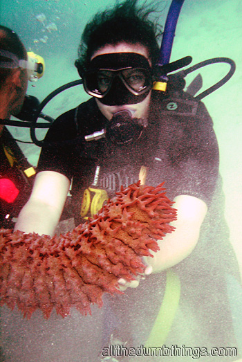 Engogirl and pineapple sea cucumber